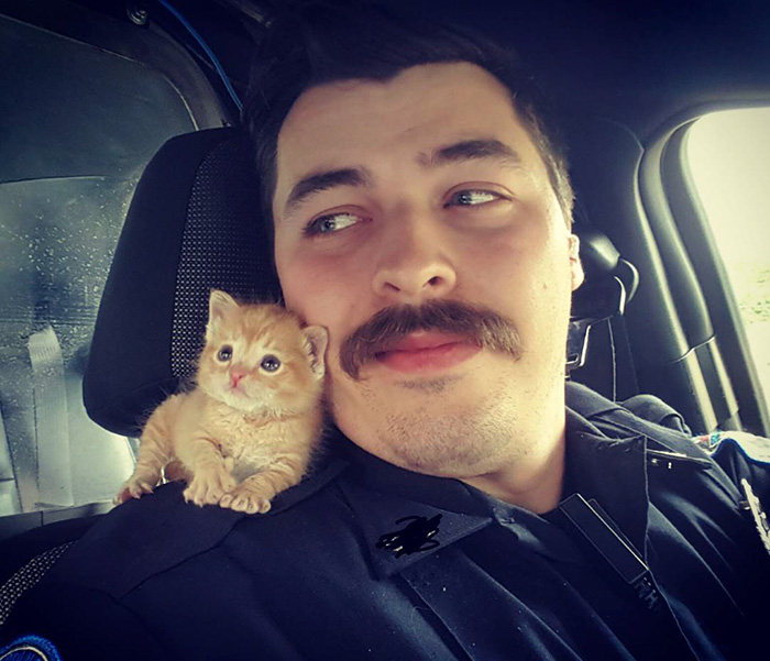 gato-squirt-rescatado-policia-donutoperator (6)