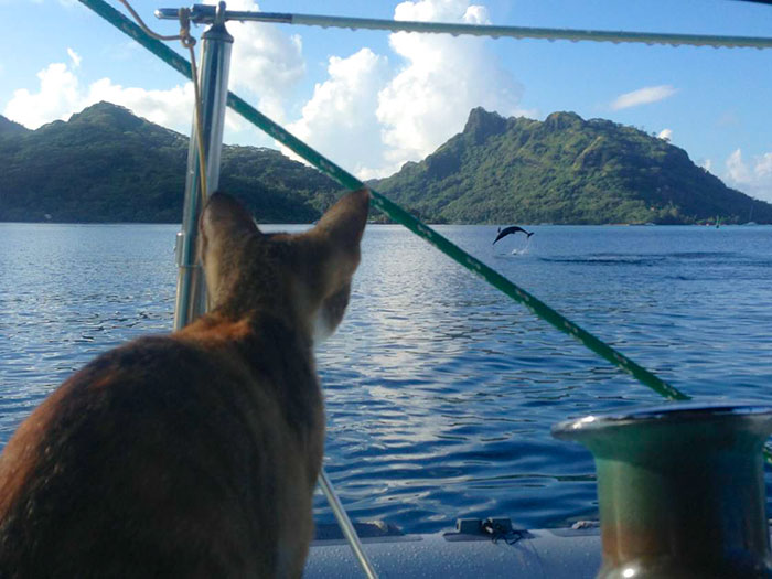 navegar-mundo-barco-gato-amelia-liz-clark (10)
