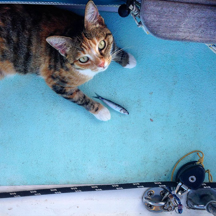 navegar-mundo-barco-gato-amelia-liz-clark (14)