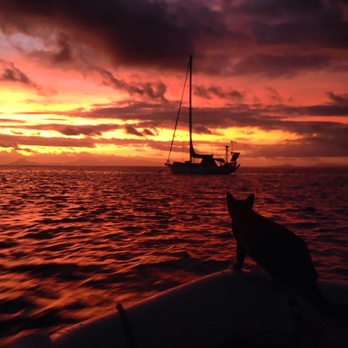 navegar-mundo-barco-gato-amelia-liz-clark (17)