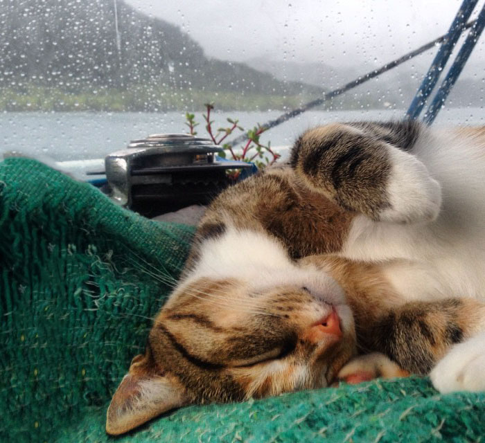navegar-mundo-barco-gato-amelia-liz-clark (2)