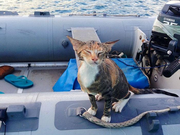 navegar-mundo-barco-gato-amelia-liz-clark (3)