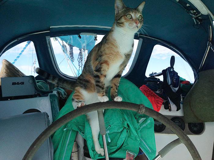 navegar-mundo-barco-gato-amelia-liz-clark (7)