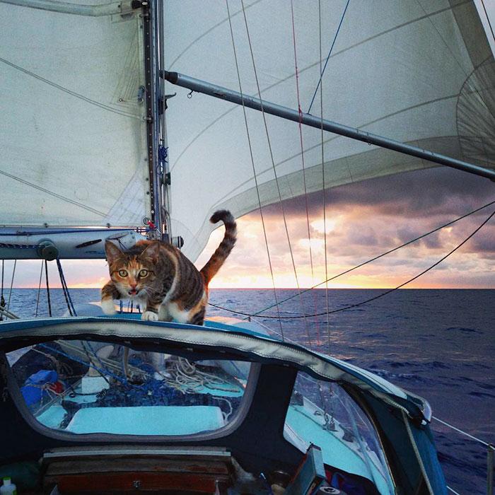 navegar-mundo-barco-gato-amelia-liz-clark (8)