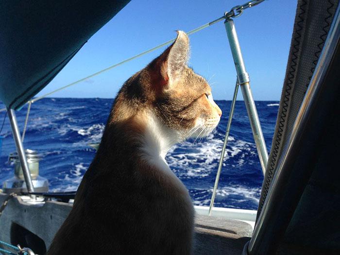 navegar-mundo-barco-gato-amelia-liz-clark (9)