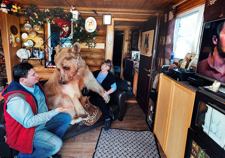 oso-adoptado-stepan-familia-rusa (1)
