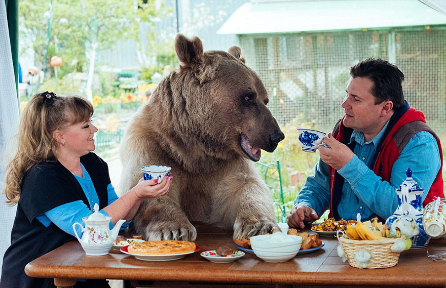 oso-adoptado-stepan-familia-rusa (10)