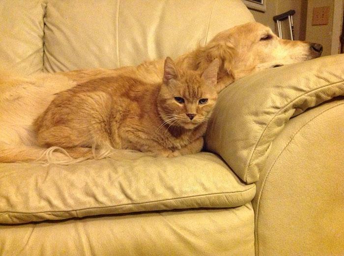 amistad-perro-forsberg-gato-maxwell (1)