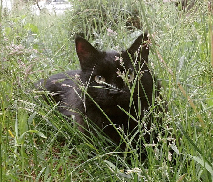 amistad-perro-forsberg-gato-maxwell (4)
