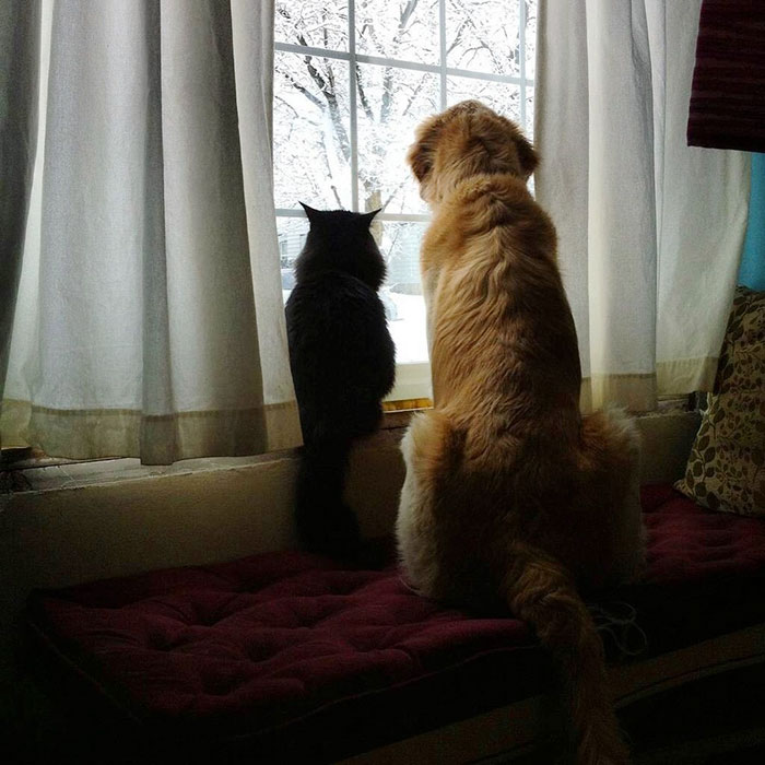 amistad-perro-forsberg-gato-maxwell (5)