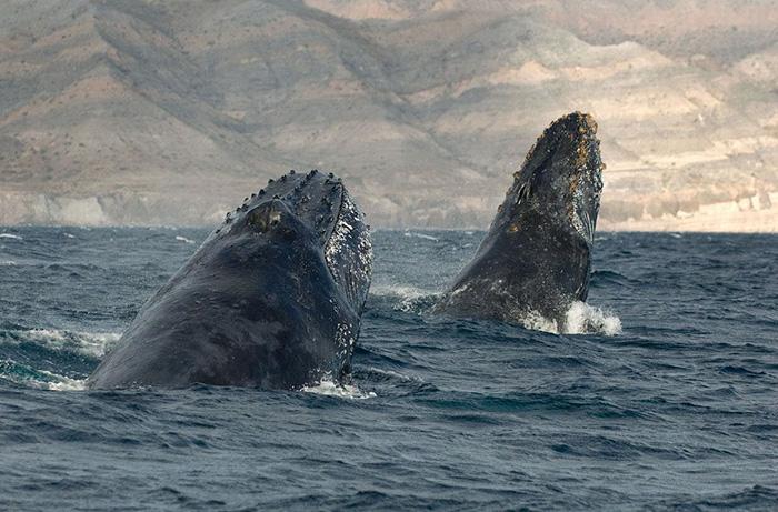 fotografia-cetaceos-ballenas-delfines-christopher-swann (1)