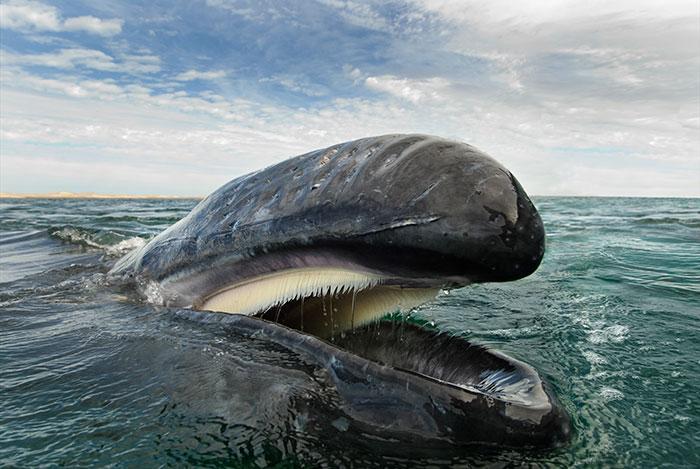 fotografia-cetaceos-ballenas-delfines-christopher-swann (10)