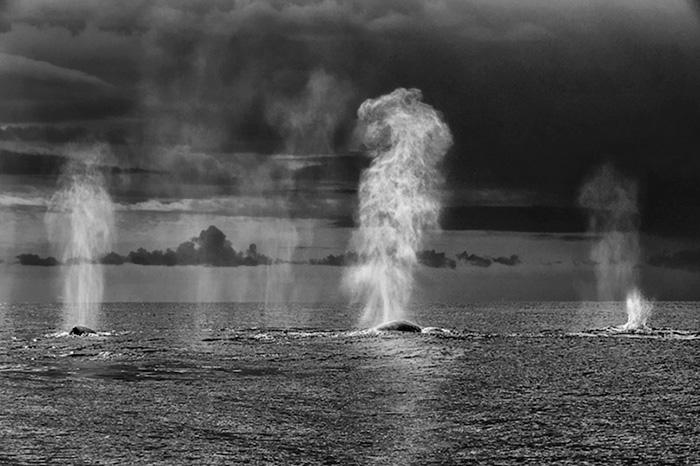 fotografia-cetaceos-ballenas-delfines-christopher-swann (2)