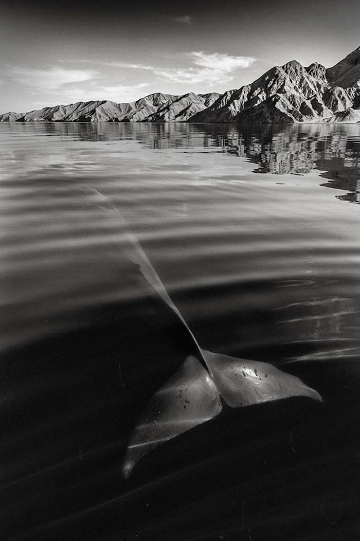 fotografia-cetaceos-ballenas-delfines-christopher-swann (3)