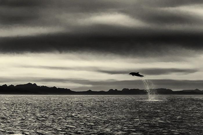 fotografia-cetaceos-ballenas-delfines-christopher-swann (5)