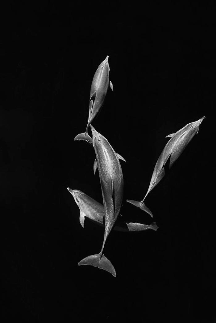 fotografia-cetaceos-ballenas-delfines-christopher-swann (8)