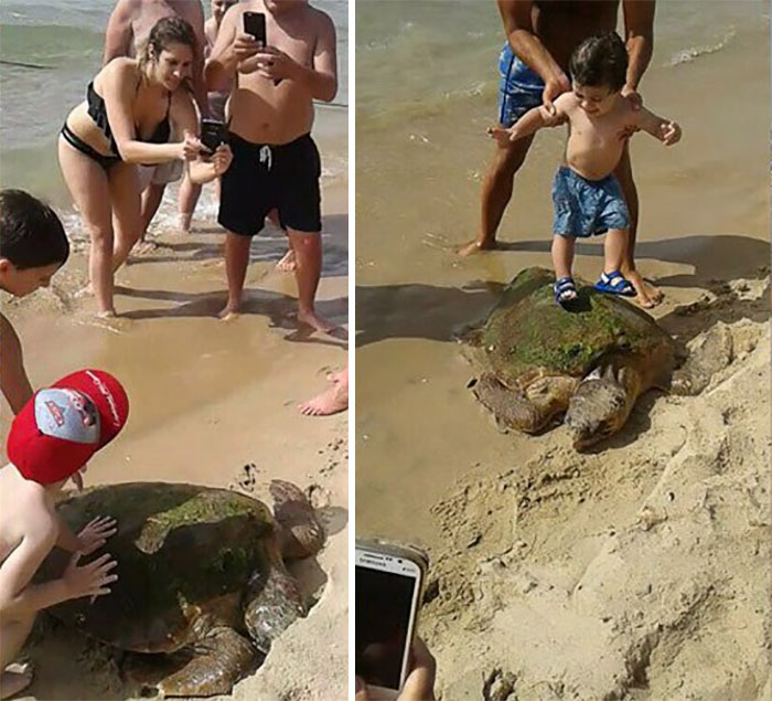 tortuga-marina-maltratada-libano (3)