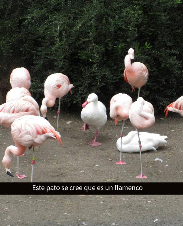 divertidos-snapchats-2-4