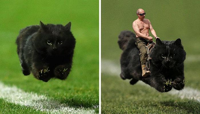 Un gato interrumpe un partido de rugby e internet responde