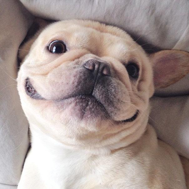 perro-narcoleptico-adorable-milo (3)