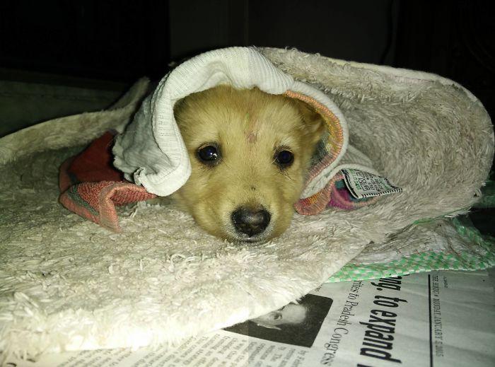 perros-adoptados-primer-dia-casa (1)