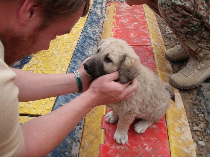 perros-adoptados-primer-dia-casa (2)