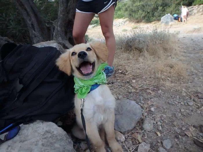 perros-adoptados-primer-dia-casa (5)