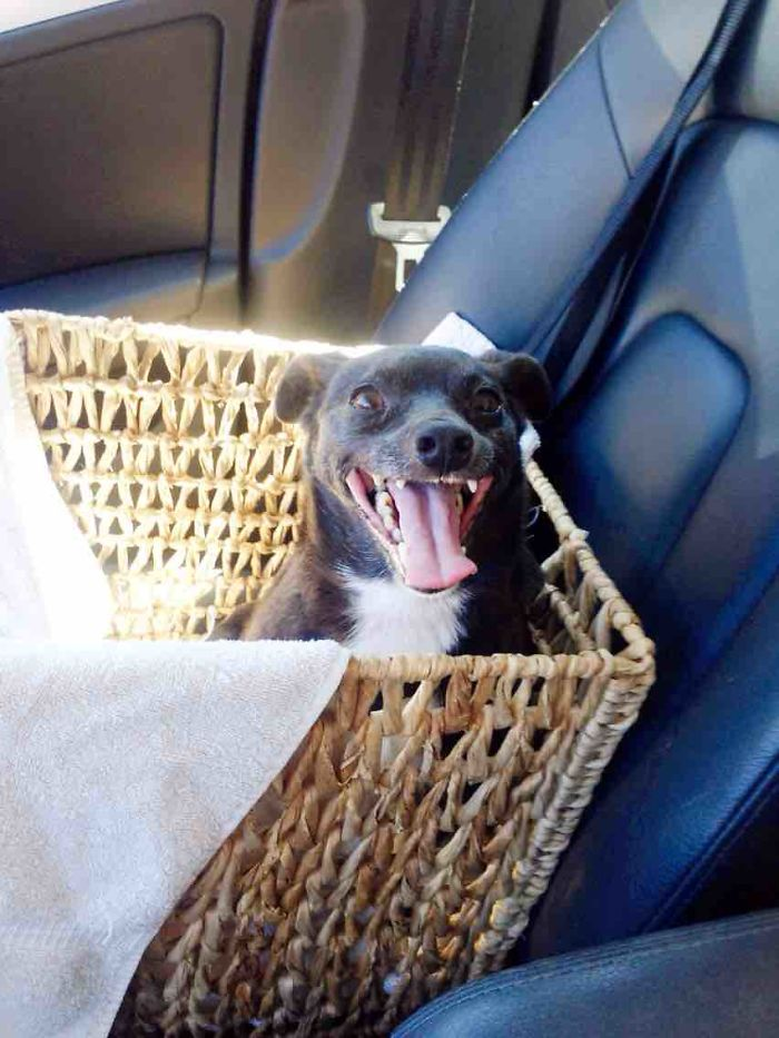 perros-adoptados-primer-dia-casa (6)