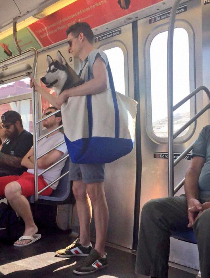 perros-grandes-bolsos-metro-nueva-york (2)