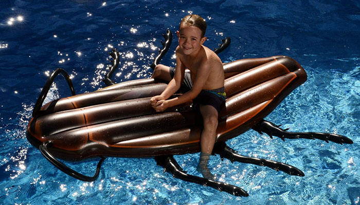 cucaracha-gigante-hinchable-piscina-kangaroo (6)