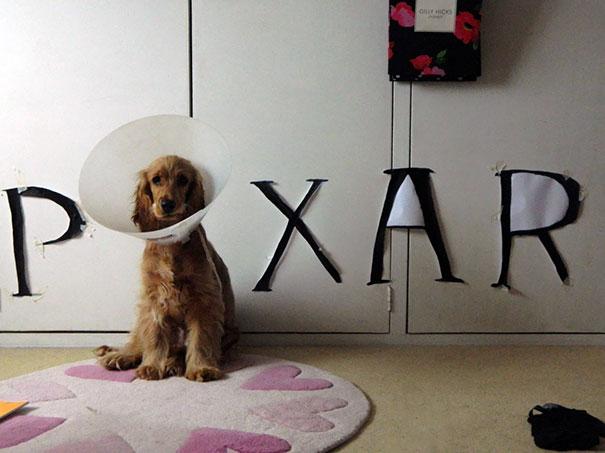 duenos-creativos-perros (2)