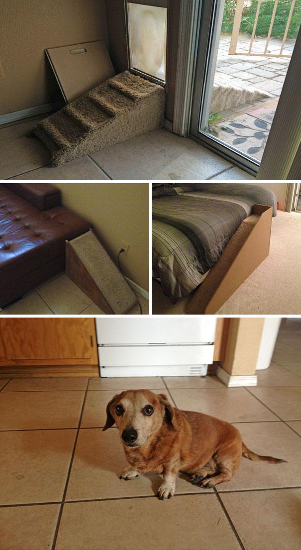 duenos-creativos-perros (8)