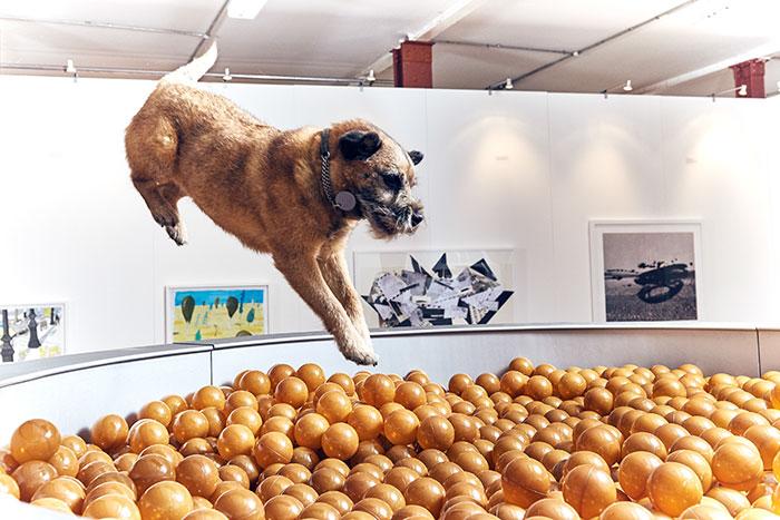 exposicion-arte-perros-play-more-dominic-wilcox-londres (2)
