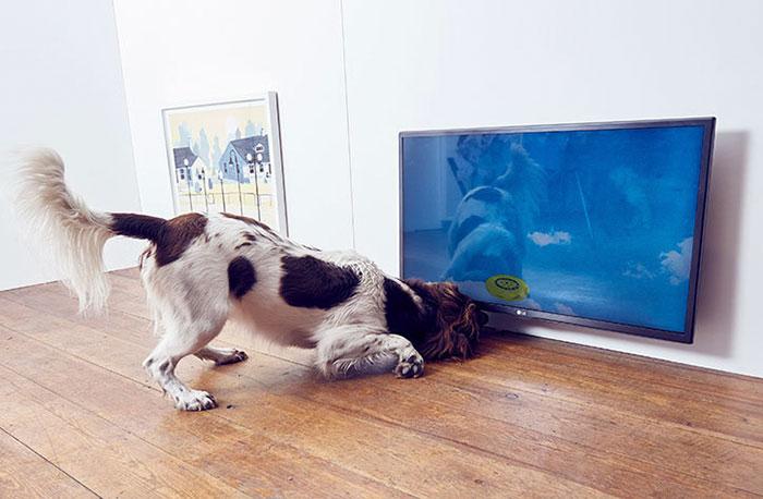 exposicion-arte-perros-play-more-dominic-wilcox-londres (4)
