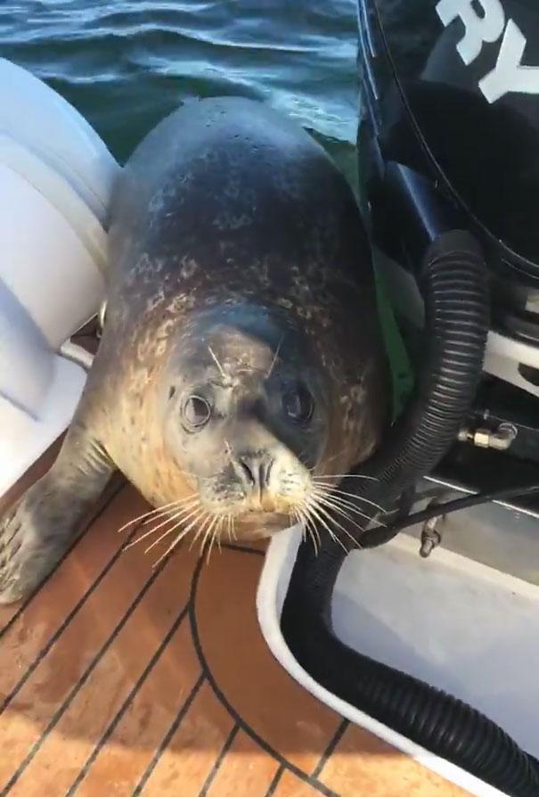 foca-barco-huida-orcas-canada (5)