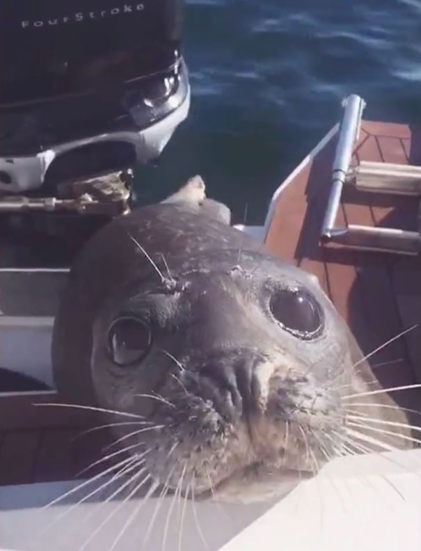 foca-barco-huida-orcas-canada (6)