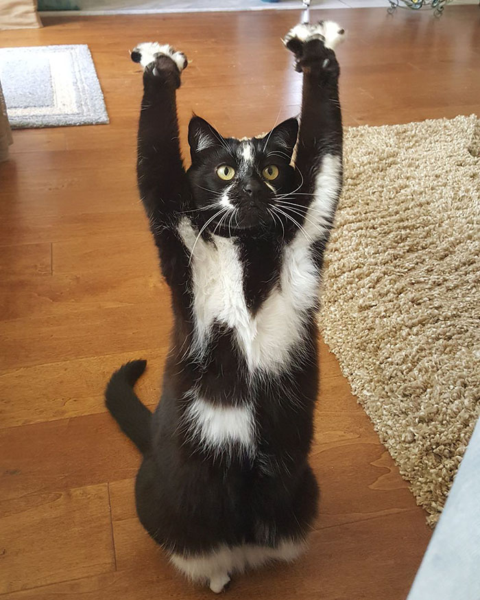 gato-manos-arriba-keys (10)