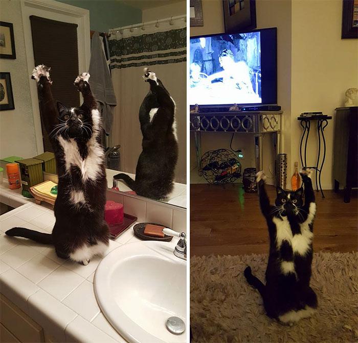 gato-manos-arriba-keys (12)