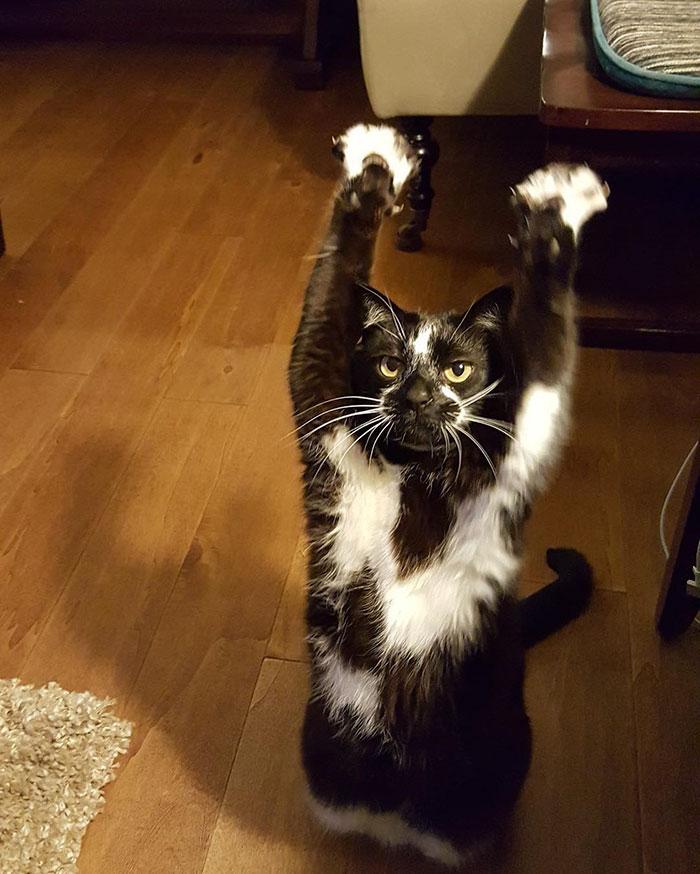 gato-manos-arriba-keys (3)