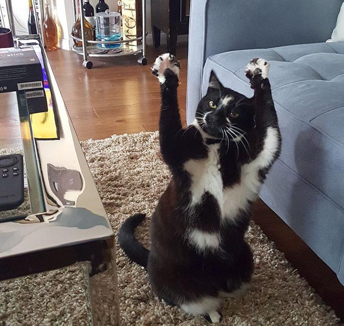 gato-manos-arriba-keys (4)