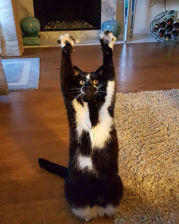 gato-manos-arriba-keys (6)