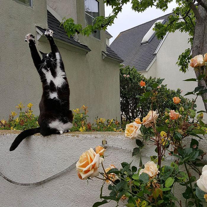 gato-manos-arriba-keys (7)