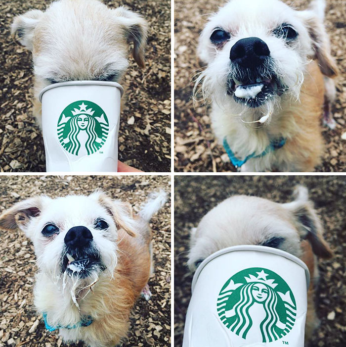 perros-refugio-tomando-puppuccino-starbucks (4)