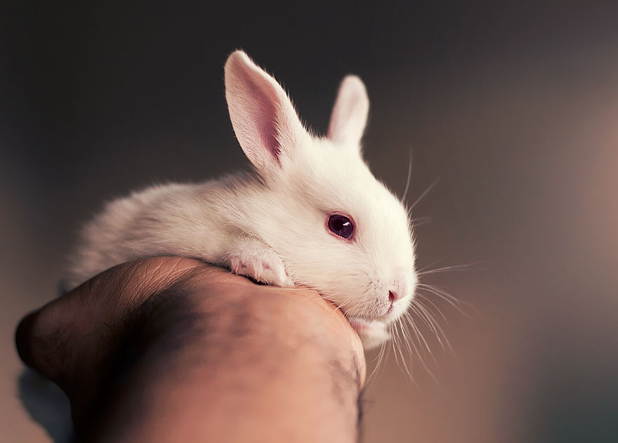 sesion-fotos-cria-conejo-ashraful-arefin (10)