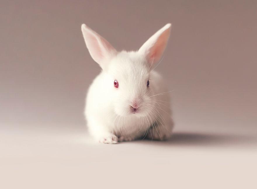 sesion-fotos-cria-conejo-ashraful-arefin (5)