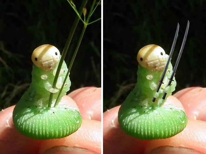 Esta oruga sosteniendo unas hierbas desata una batalla de photoshop