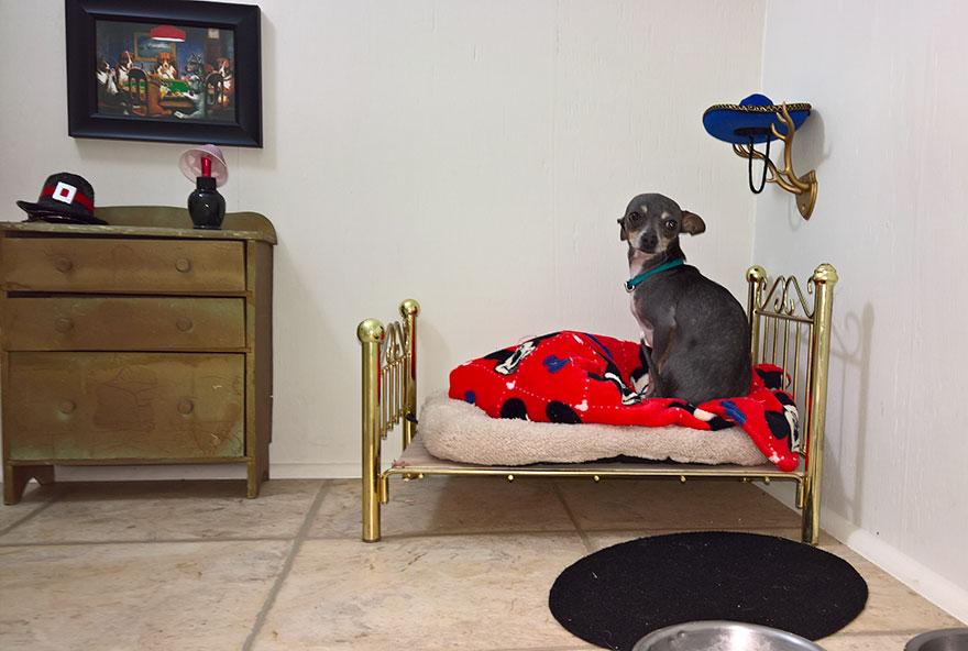 dormitorio-bajo-escaleras-perro-chihuahua-pancho (1)