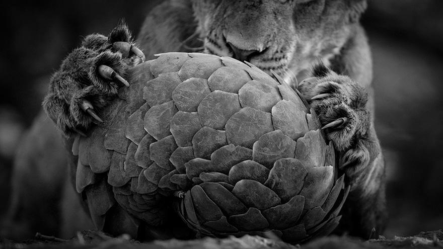 finalistas-52-competicion-fotografo-fauna-salvaje-2016 (11)