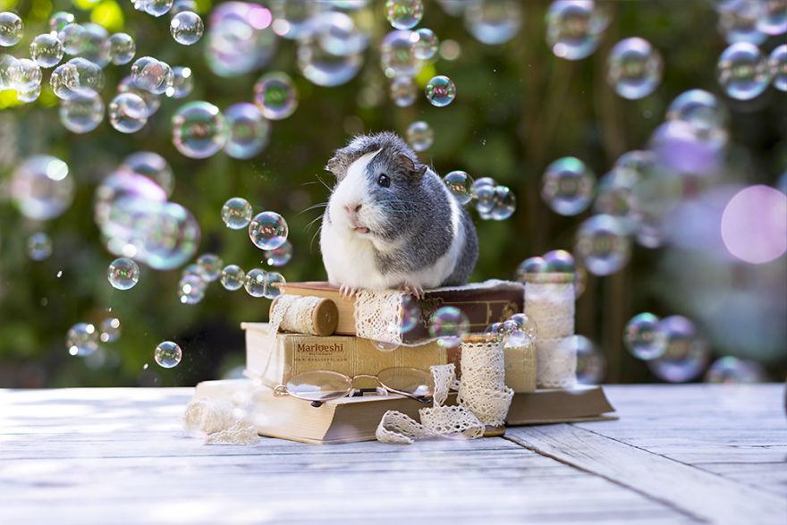 fotos-mascotas-cobaya-mieps (1)