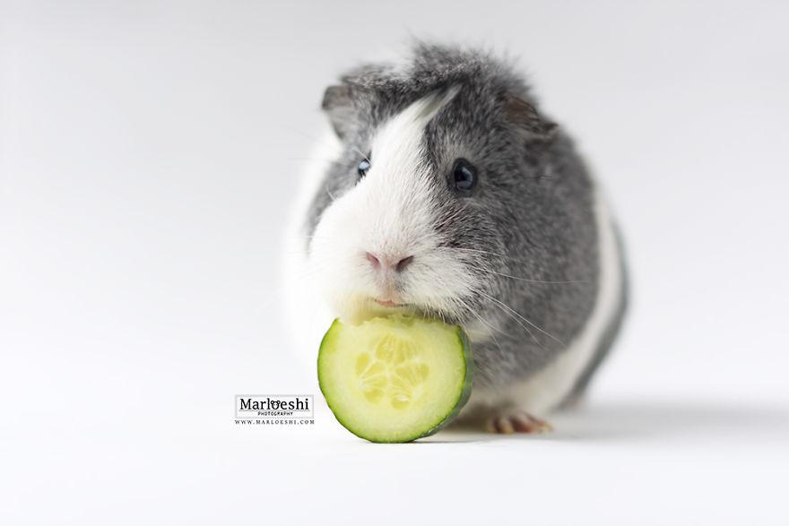 fotos-mascotas-cobaya-mieps (11)